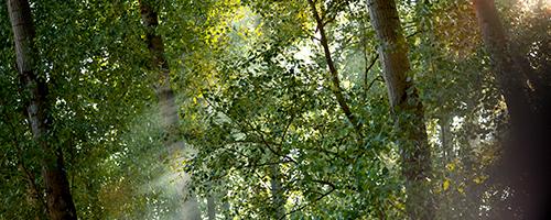 ECOBUNDAN a sostegno dell'ambiente