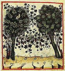 arbustum gallicum